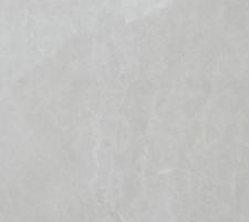 白玉兰White Magnolia